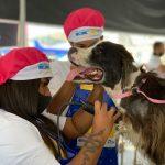 """Meriti promove ação inédita de cuidado aos animais – """"Dia P"""""""