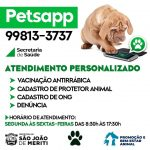 PetsApp – Canal de comunicação para protetores e donos de animais apresenta crescimento em poucas semanas