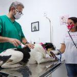 São João de Meriti promove ação de conscientização sobre o câncer de mama em cadelas e gatas